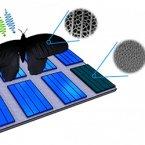 بال پروانه ها و سلول های فتوولتائیک خورشیدی